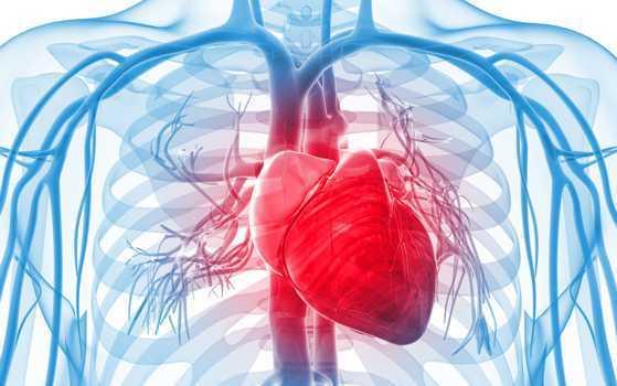 cardio vascular support