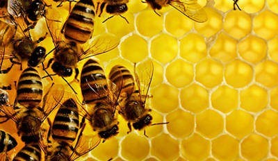Natural Stress Relief – Forever Royal Jelly